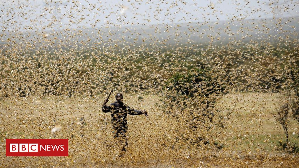 Hundreds of billions of locusts swarm in East Africa